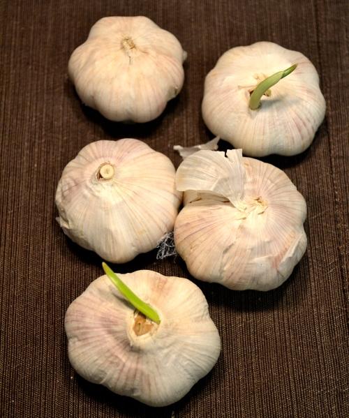 garlic troves